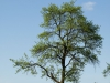 Plants-Trees_Photo_Texture_B_P5032262