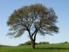 Plants-Trees_Photo_Texture_B_P5032295