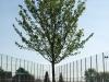 Plants-Trees_Photo_Texture_B_P5032300