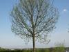 Plants-Trees_Photo_Texture_B_P5032308