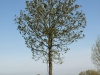 Plants-Trees_Photo_Texture_B_P5032322