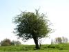 Plants-Trees_Photo_Texture_B_P5032334