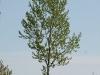 Plants-Trees_Photo_Texture_B_P5042365