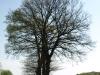 Plants-Trees_Photo_Texture_B_P5042367