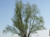 Plants-Trees_Photo_Texture_B_P5042370