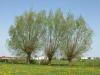 Plants-Trees_Photo_Texture_B_P5042374