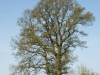 Plants-Trees_Photo_Texture_B_P5042380