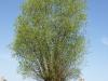 Plants-Trees_Photo_Texture_B_P5042387
