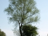 Plants-Trees_Photo_Texture_B_P5042392