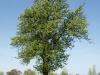 Plants-Trees_Photo_Texture_B_P5042403