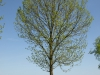 Plants-Trees_Photo_Texture_B_P5042408