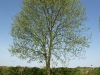 Plants-Trees_Photo_Texture_B_P5042409