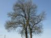 Plants-Trees_Photo_Texture_B_P5042410