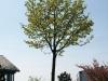 Plants-Trees_Photo_Texture_B_P5042429