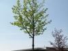Plants-Trees_Photo_Texture_B_P5042435