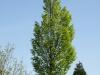 Plants-Trees_Photo_Texture_B_P5042441