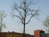 Plants-Trees_Photo_Texture_B_P5042447