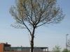 Plants-Trees_Photo_Texture_B_P5042449