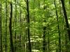 Plants-Trees_Photo_Texture_B_P5042459
