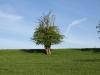 Plants-Trees_Photo_Texture_B_P5052512