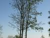 Plants-Trees_Photo_Texture_B_P5052513
