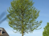 Plants-Trees_Photo_Texture_B_P5052549
