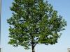 Plants-Trees_Photo_Texture_B_P5052553