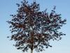Plants-Trees_Photo_Texture_B_P5052556