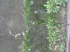 Plants-Various_Photo_Texture_B_02029