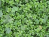 Plants-Various_Photo_Texture_B_02121