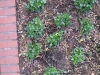 Plants-Various_Photo_Texture_B_08720