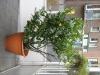 Plants-Various_Photo_Texture_B_09140