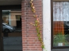 Plants-Various_Photo_Texture_B_10100