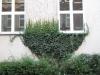 Plants-Various_Photo_Texture_B_10120