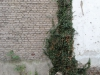 Plants-Various_Photo_Texture_B_10150