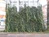 Plants-Various_Photo_Texture_B_10570