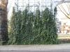Plants-Various_Photo_Texture_B_10590