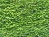 Plants-Various_Photo_Texture_B_1149
