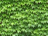 Plants-Various_Photo_Texture_B_1150