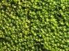 Plants-Various_Photo_Texture_B_1160