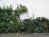 Plants-Various_Photo_Texture_B_15150