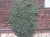 Plants-Various_Photo_Texture_B_22550