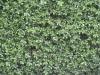 Plants-Various_Photo_Texture_B_2430