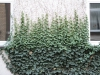 Plants-Various_Photo_Texture_B_27480