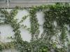 Plants-Various_Photo_Texture_B_3274
