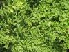 Plants-Various_Photo_Texture_B_3763