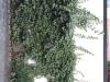 Plants-Various_Photo_Texture_B_40600