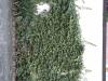 Plants-Various_Photo_Texture_B_40610