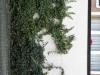 Plants-Various_Photo_Texture_B_40620