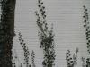 Plants-Various_Photo_Texture_B_5604